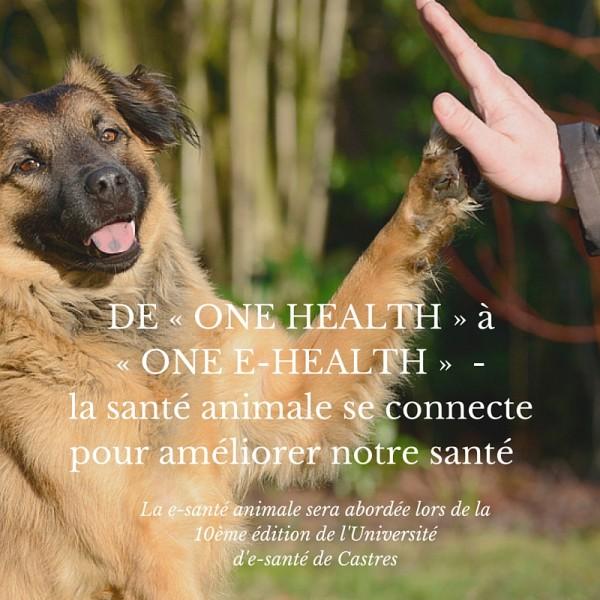 DE « ONE HEALTH » A « ONE E-HEALTH » la santé animale se connecte pour améliorer notre santé